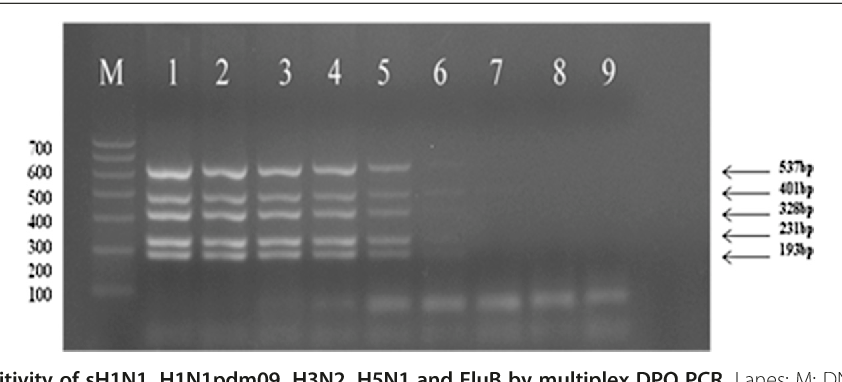 A multiplex PCR assay for the detection of five influenza