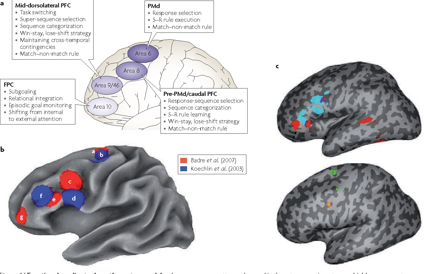 Figure 2 from Is the rostro-caudal axis of the frontal lobe ...