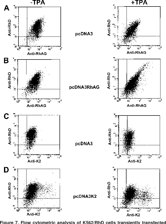 flow cytometric analysis of k562/rhd cells transiently transfected with  empty pcdna3