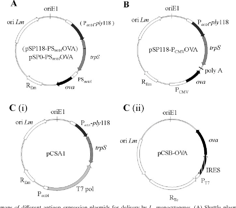 FIG. 1. Schematic maps of different antigen expression plasmids for delivery by L. monocytogenes. (A) Shuttle plasmid for expression and secretion of OVA by L. monocytogenes. (B) Plasmid for expression of OVA under control of the CMV promoter (PCMV). (C) Two-plasmid system for transcription of ova mRNA by L. monocytogenes under control of a T7 promoter (PT7) and for translation of OVA protein by host cells via an internal ribosomal entry site (IRES). In contrast to plasmid pSP0-PSactAOVA, plasmid pSP118-PSactAOVA contains the phage lysin 118 gene (ply118) under control of the promoter of the L. monocytogenes actA gene (PactA). (Panel i) Plasmid pCSA1 encodes the expression cassettes for T7 polymerase (T7 pol) and phage lysin 118 (ply118), both under control of PactA. (Panel ii) Plasmid pCSB-OVA encodes the ova mRNA expression cassette under control of the T7 promoter. trpS, gene encoding L. monocytogenes tryptophanyl tRNA synthetase; REm, erythromycin resistance marker; RTc, tetracycline resistance marker; ori Lm, origin of replication for L. monocytogenes; oriE1, origin of replication for E. coli; PSactA, promoter and secretion signal of actA; ova, partial ovalbumin gene; poly A, polyadenylation site.