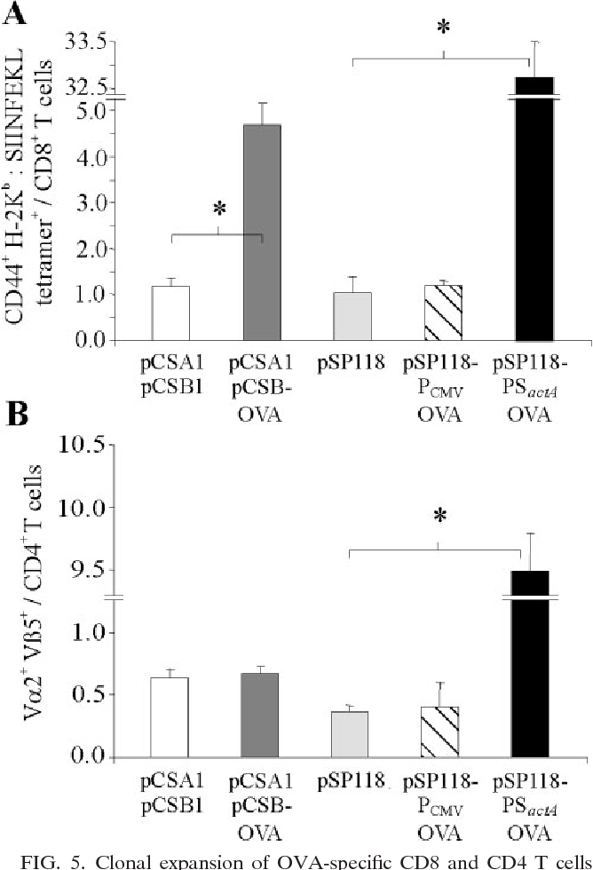 FIG. 5. Clonal expansion of OVA-specific CD8 and CD4 T cells following infection with 5 107 CFU of L. monocytogenes trpS containing the plasmids indicated. (A) One day prior to infection, 107 spleen cells derived from OT-I mice were transferred into C57BL/6 mice. The frequencies of CD44 , H-2Kb–SIINFEKL tetramer-positive cells in all the CD8 T cells in spleens were determined 3 days after infection, which indicated presentation of OVA epitopes via MHC class I. (B) To investigate presentation via MHC class II, 107 spleen cells derived from OT-II mice were transferred into C57BL/6 mice 1 day prior to infection. Three days later, the frequencies of V 2 V 5 cells in all the CD4 T cells in spleens of infected animals were determined. L. monocytogenes trpS/pCSA1/pCSB1 and L. monocytogenes trpS/pSP118 were the control strains. The results are expressed as means standard deviations (n 3) and are representative of the results of at least two experiments. An asterisk indicates that there is a significant difference (P 0.05, as determined two-tailed Student's t test) between experimental groups.