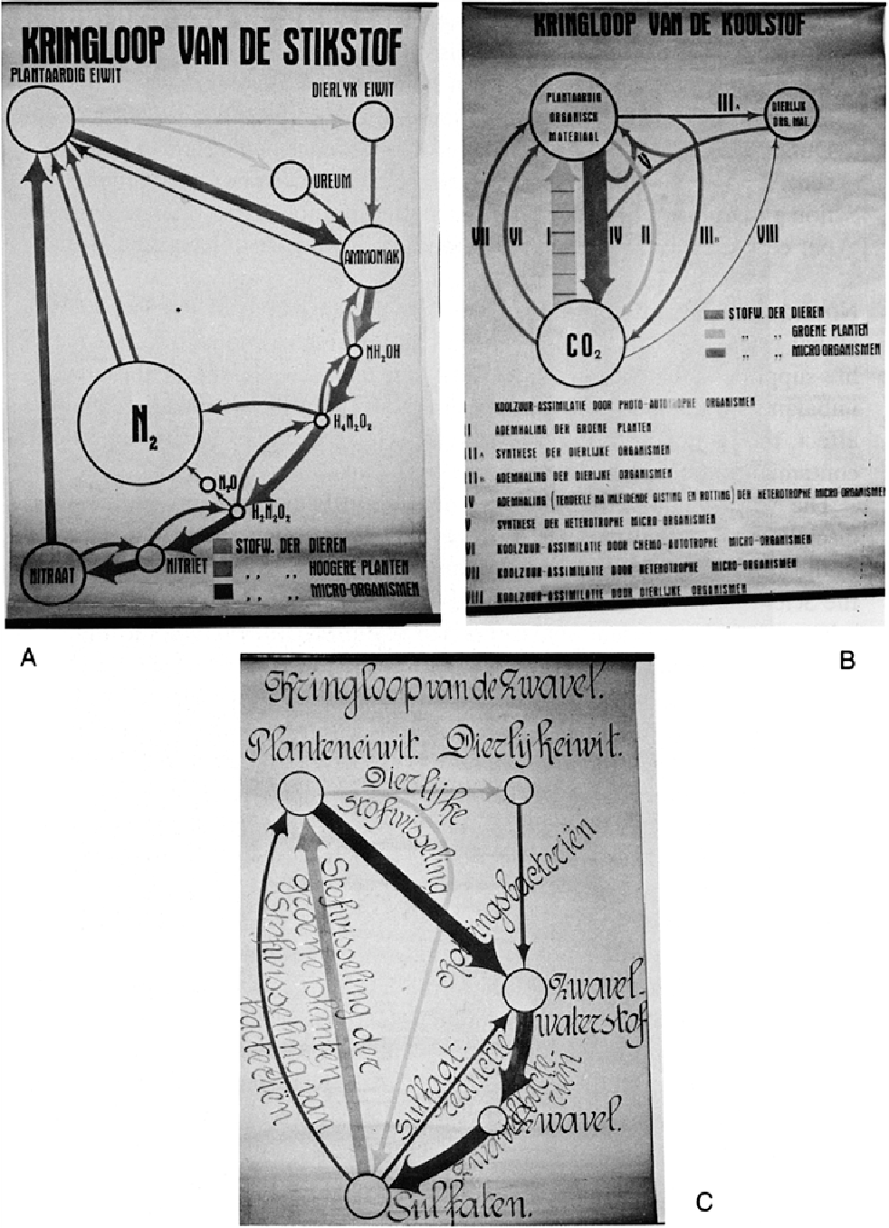 Figure 4 from kluyvers work in retrospect wisdom of foresight diagrams used by kluyver in his lectures on the carbon nitrogen ccuart Gallery