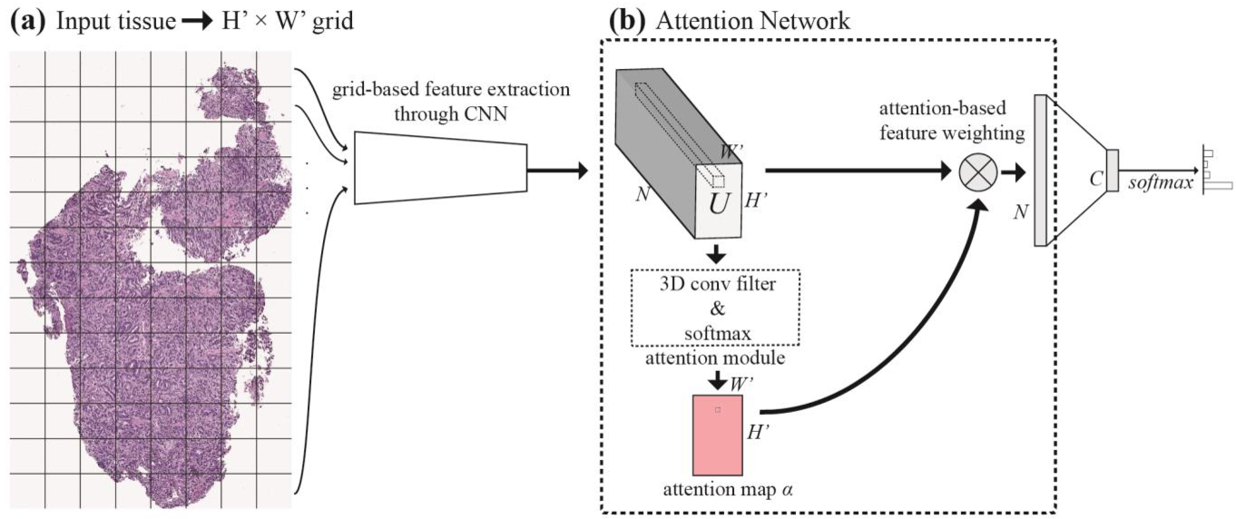 Figure 3 for Finding a Needle in the Haystack: Attention-Based Classification of High Resolution Microscopy Images