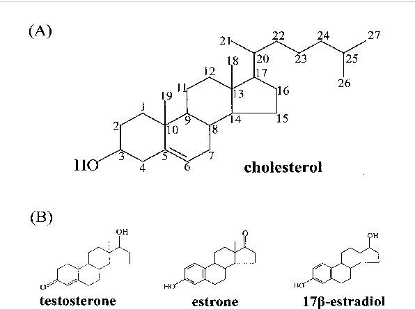 Figure 1 From Oxic And Anoxic Metabolism Of Steroids By Bacteria