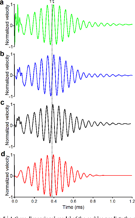 Figure 5   A three dimensional model of the cochlea predicts the correct delays. (a–c) The result from a cochlear model, which allows fast