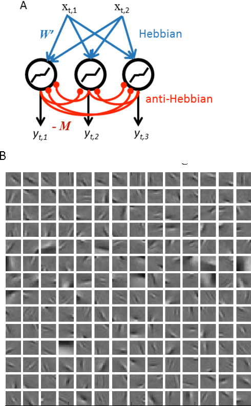 Figure 2 for A Hebbian/Anti-Hebbian Network for Online Sparse Dictionary Learning Derived from Symmetric Matrix Factorization