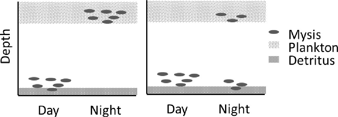 Figure 1: Diel vertical migration of Mysis. Left: traditional view of migration where entire population migrates into the water column to feed on plankton at night. Right: observed partial migration where part of the population remains on the bottom at night.
