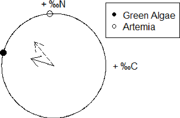 Figure 4: Circular plot for angle of change in isotope space from Mysis with empty guts to Mysis with algae-filled guts (solid arrow) and Artemia-filled guts (broken arrow). Dots represent the angle of change from Mysis with empty guts to a food source. Outer rim represents one order of magnitude of change.