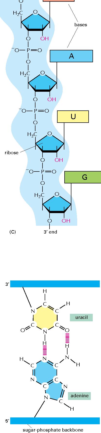 figure 6–5