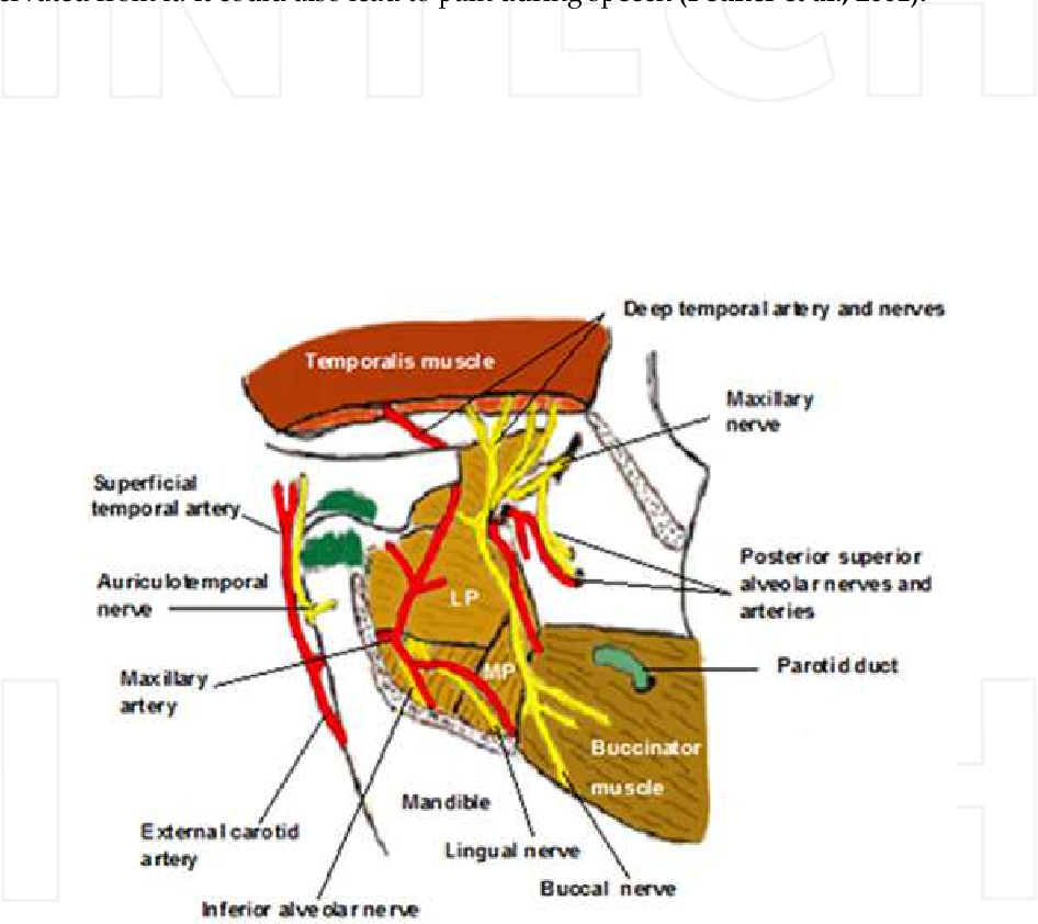 The Mandibular Nerve : The Anatomy of Nerve Injury and Entrapment ...