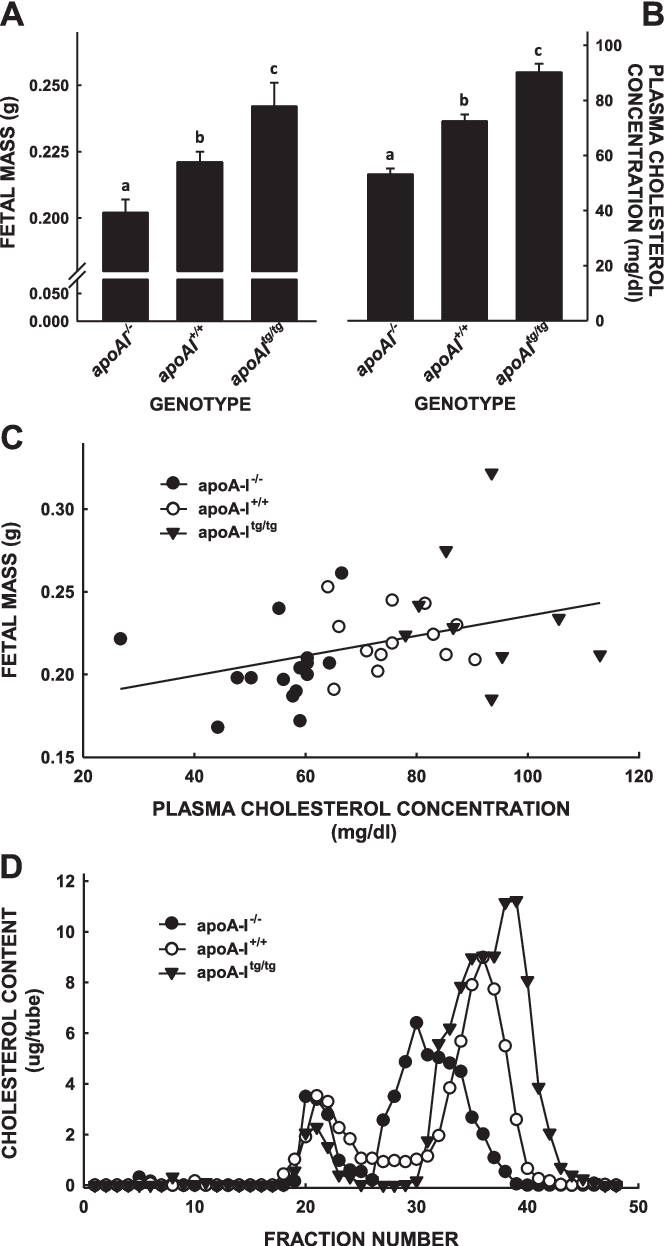 Another Study Implicates Maternal >> Studies In Genetically Modified Mice Implicate Maternal Hdl