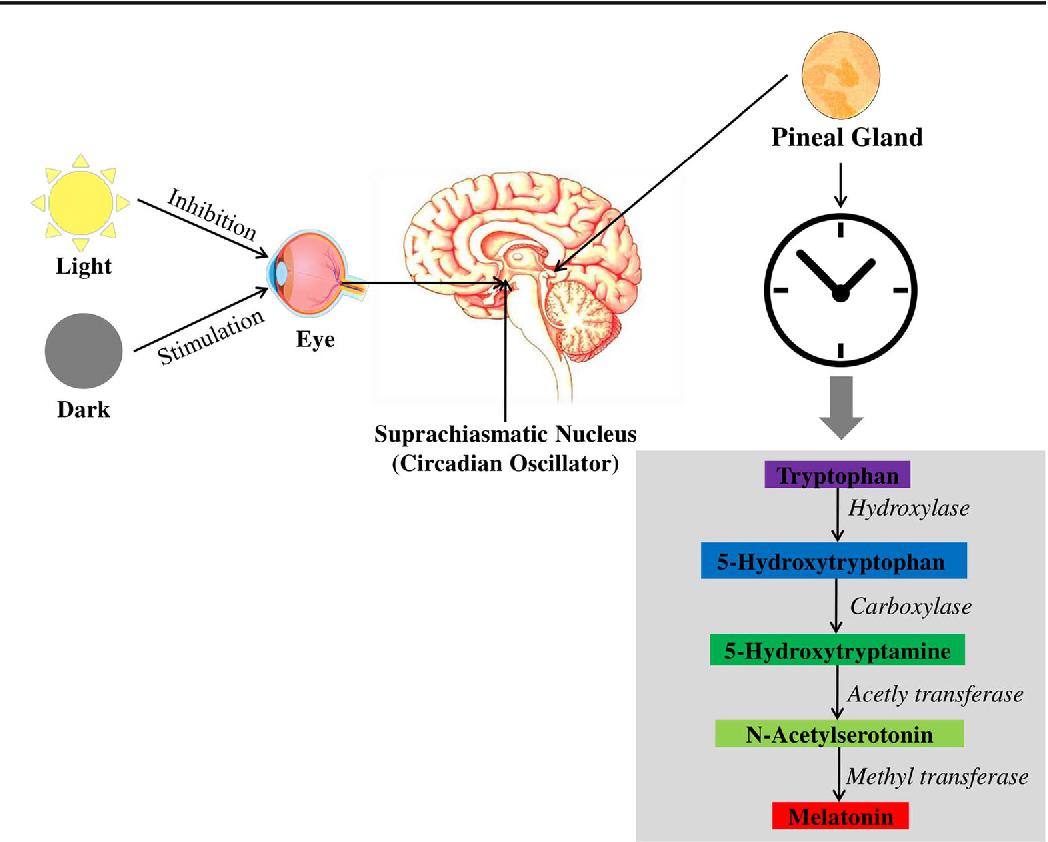 Melatonin in Alzheimer's Disease: A Latent Endogenous