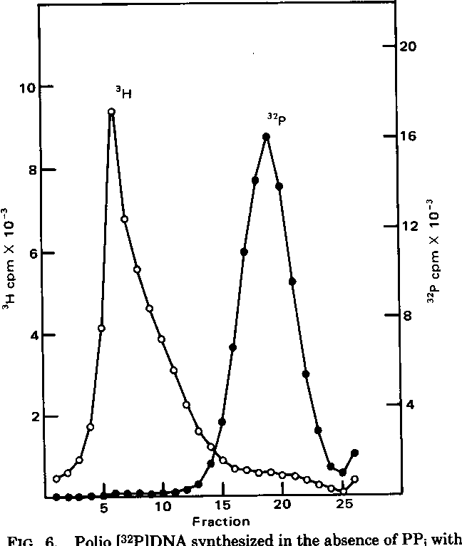 Figure 6 from sodium pyrophosphate inhibition of rnadna hybrid polio 32pdna synthesized in the absence of pp1 with maxwellsz