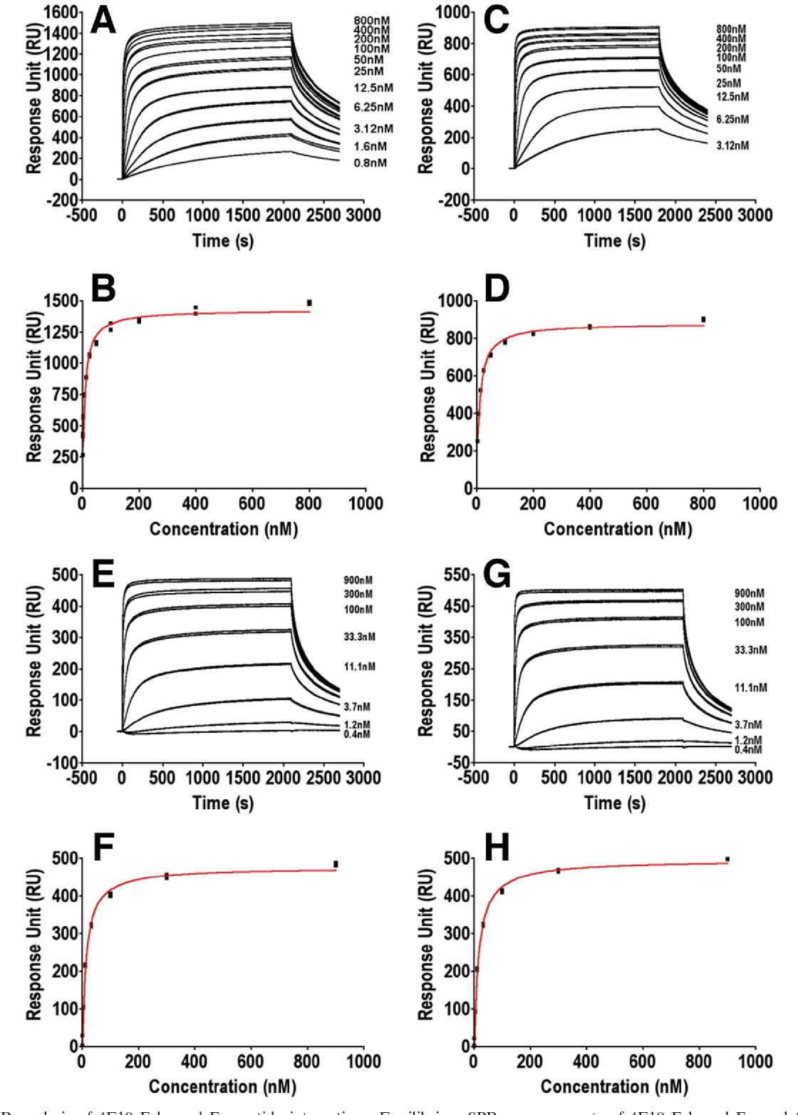 FIG. 5. SPR analysis of 4E10 Fab- and Fv-peptide interactions. Equilibrium SPR measurements of 4E10 Fab and Fv analytes binding to chip-coupled SF162 4E10 epitope peptides are shown. All sample injections were carried out in a randomized duplicate run, at 10 l/min for 35 min to reach equilibrium, followed by a 10-min dissociation phase. Double-reference-subtracted SPR responses are shown in panels A, C, E, and G, and corresponding binding analyses are shown in panels B, D, F, and H: Fab4E10 (A and B); Fv4E10wt (C and D); Fv4E10[W(H100)A] (E and F); Fv4E10[G(L50)E] (G and H).