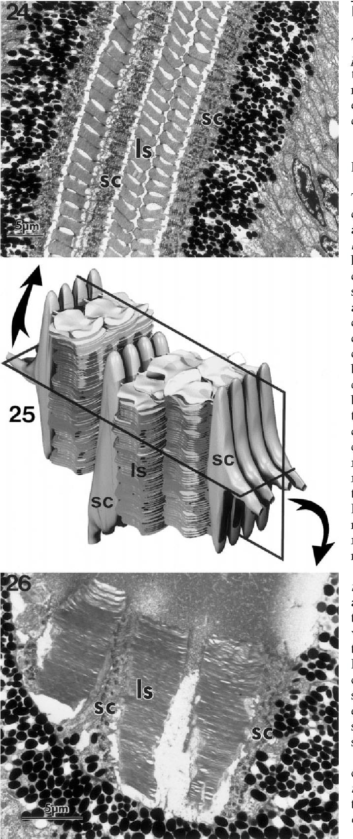 figure 24–26