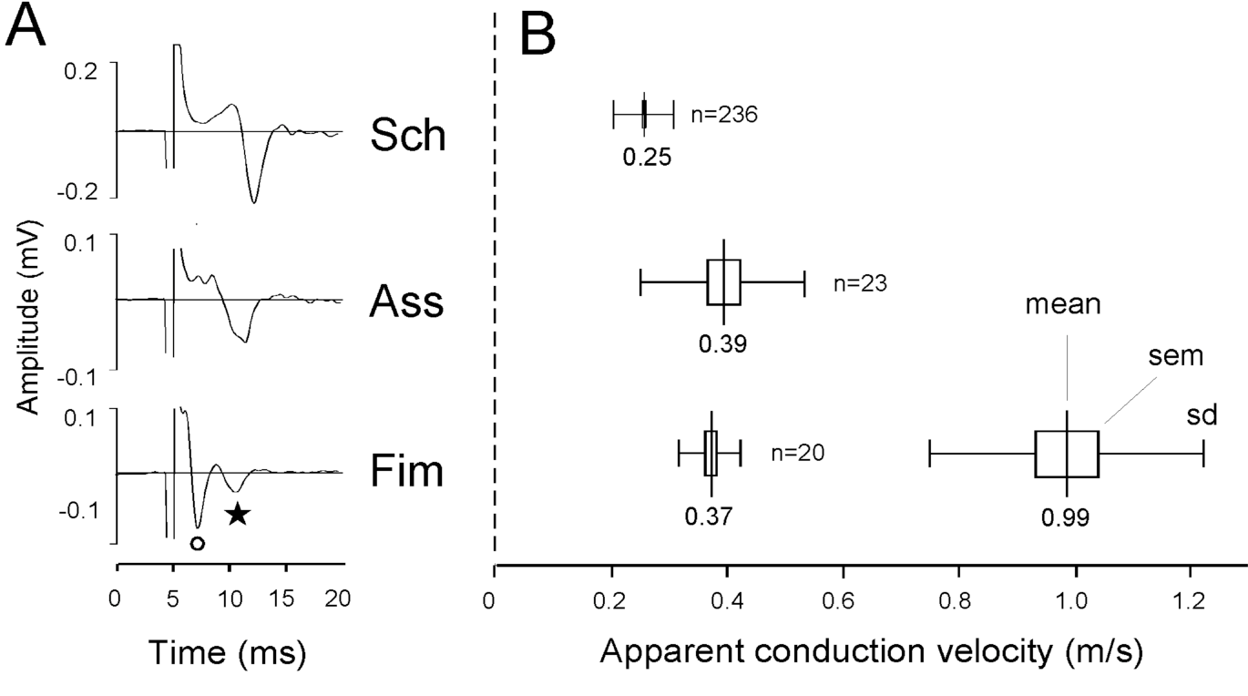 Figure 1 from the hippocampal lamella hypothesis revisited hippocampal compound action potentials and conduction velocities a averages ccuart Choice Image