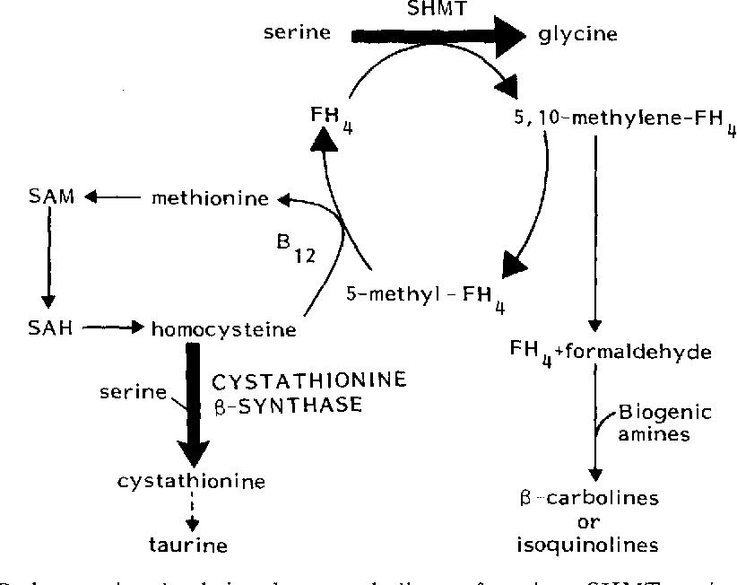 Amino acid studies in transient acute polymorphic psychosis