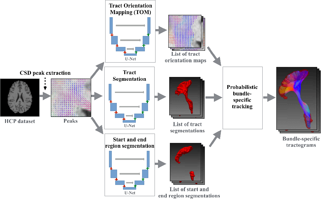 Figure 3 for Combined tract segmentation and orientation mapping for bundle-specific tractography