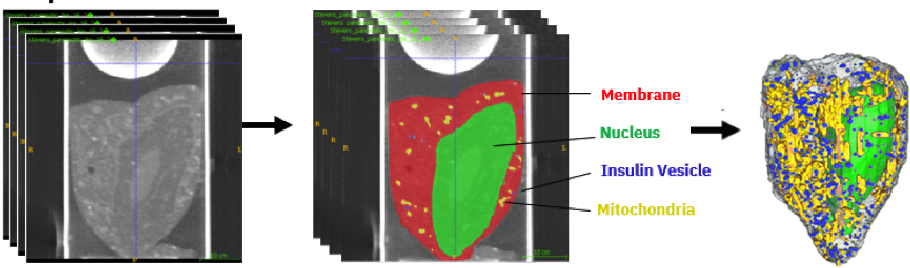 Figure 1 for Neural Network Segmentation of Cell Ultrastructure Using Incomplete Annotation