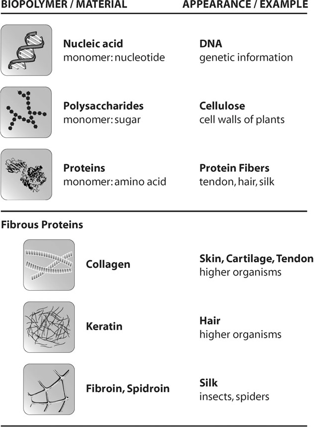 Figure 1 From Hierarchical Structures Made Of Proteins The Complex
