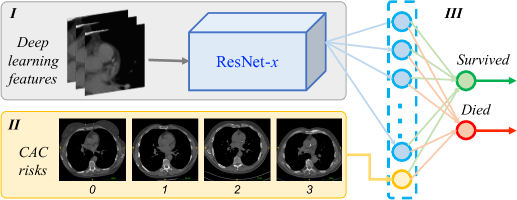 Figure 1 for Hybrid deep neural networks for all-cause Mortality Prediction from LDCT Images
