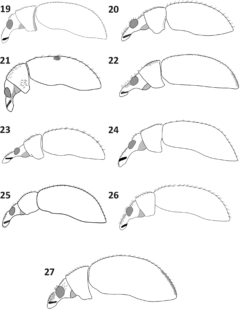 figure 19–27