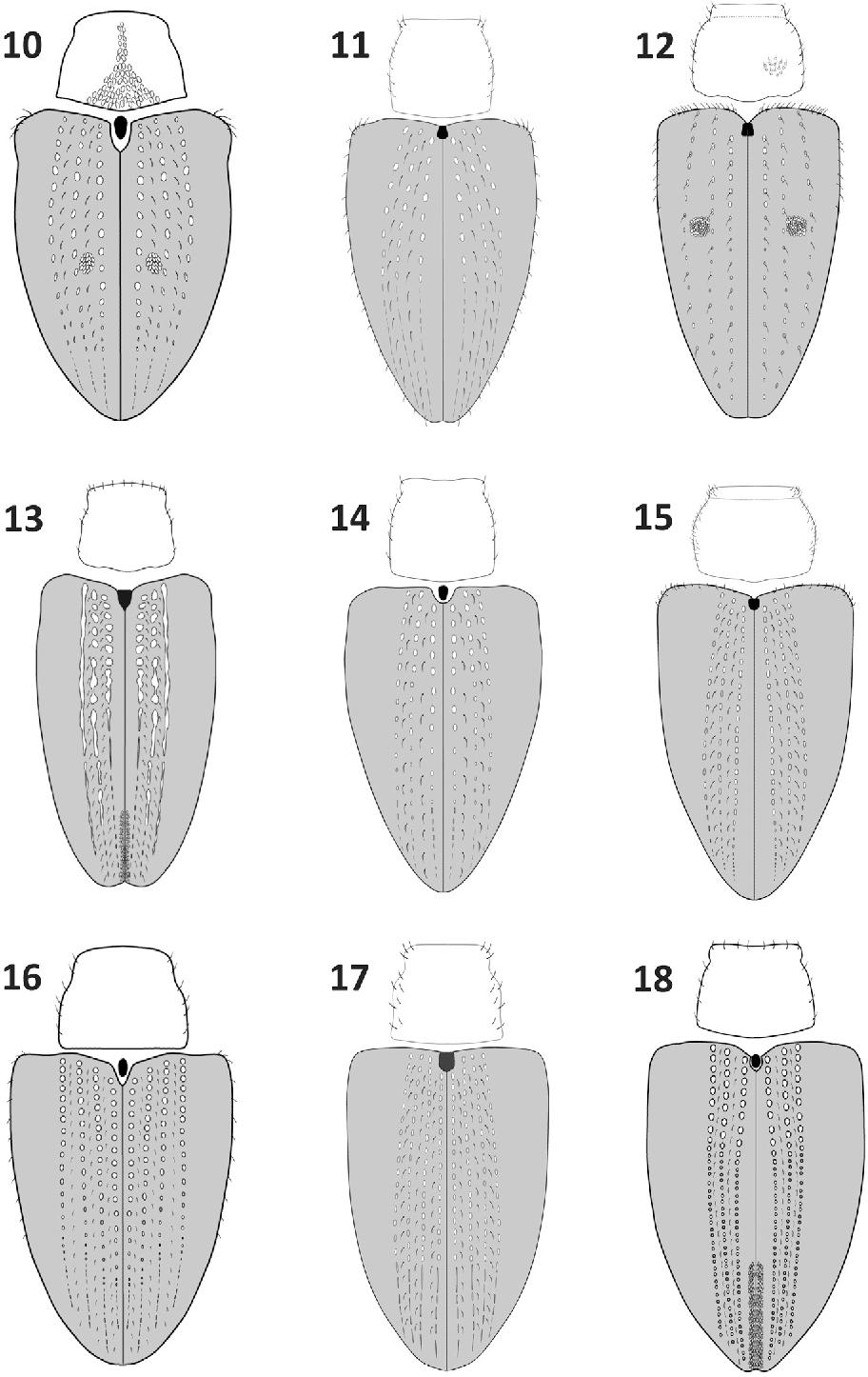 figure 10–18