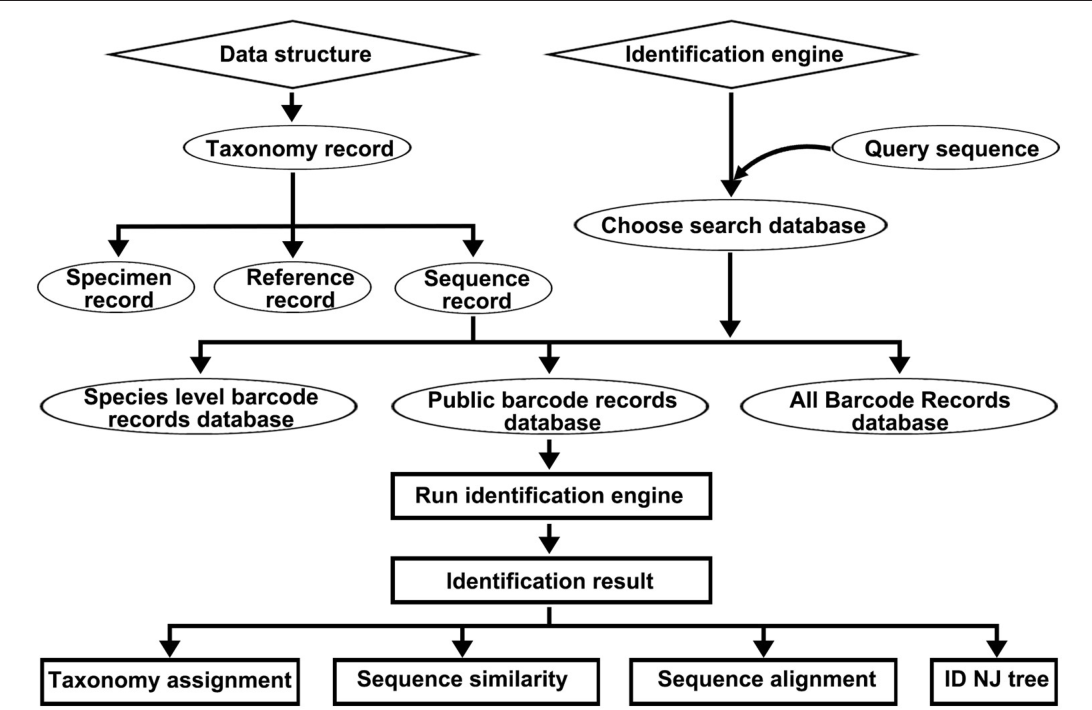 FIGURE 1 | The data structure of the DNA barcode reference library for Korean pharmacopeia and the workflow of the Korean pharmacopeia identification engine.