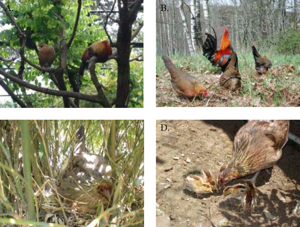 Figure 1 from Domestication effects on foraging behaviour