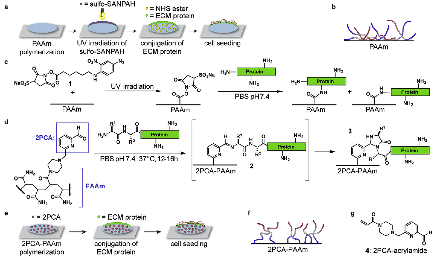 78ff35239 Figure 1 from N-terminal specific conjugation of extracellular ...