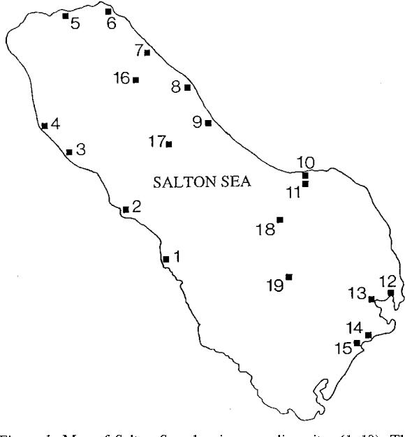 Figure 1 from Naked amoebae Protozoa of the Salton Sea California