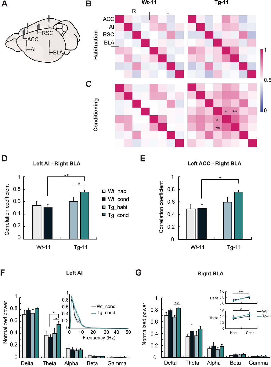Insular Cortex Alterations In Mouse >> Elevated Emotional Contagion In A Mouse Model Of Alzheimer S Disease