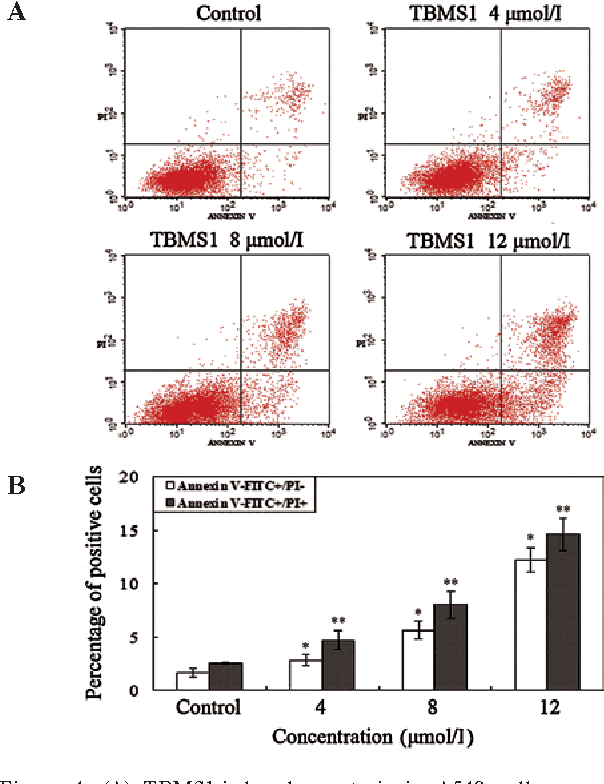 Figure 4. (a) TBMS1-induced apoptosis in a549 cells as assayed by annexin V/Pi staining. a549 cells were treated with 0, 4, 8 and 12 µmol/l TBMS1 for 24 h. The cells were then harvested and stained with annexin V/