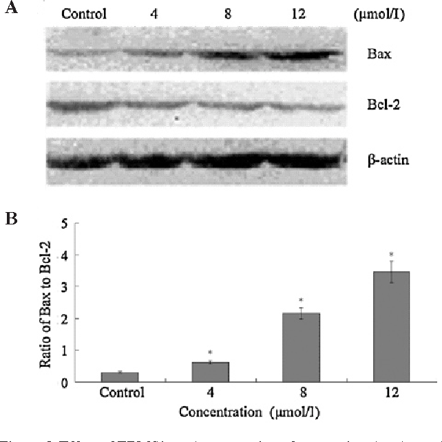 Figure 5. effect of TBMS1 on the expression of apoptosis-related proteins in a549 cells. (a) a549 cells were treated with 0, 4, 8 and 12 µmol/l TBMS1 for 24 h. Western blot analysis was performed using antibodies against Bax,