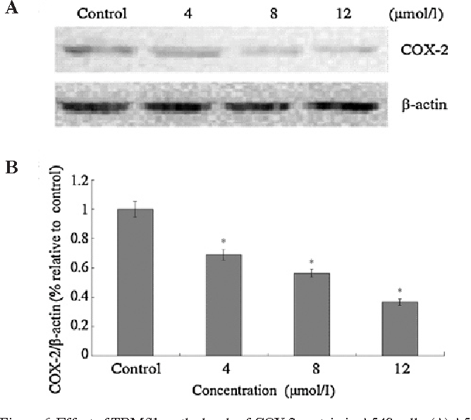 Figure 6. effect of TBMS1 on the levels of coX-2 protein in a549 cells. (a) a549 cells were treated with 0, 4, 8 and 12 µmol/l TBMS1 for 24 h. Western blot anal-