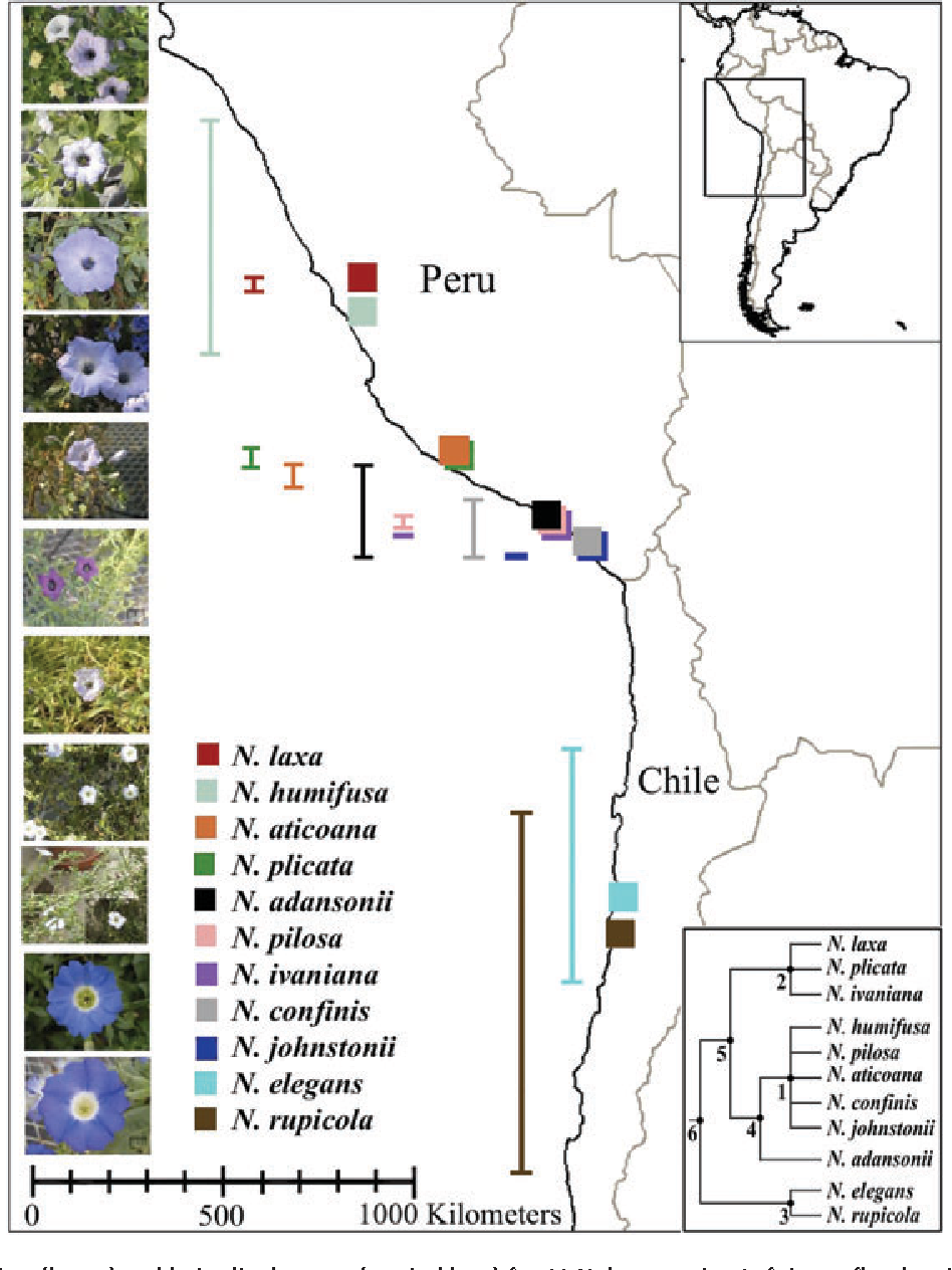 Patterns of reproductive isolation in nolana chilean bellflower figure 1 ccuart Choice Image