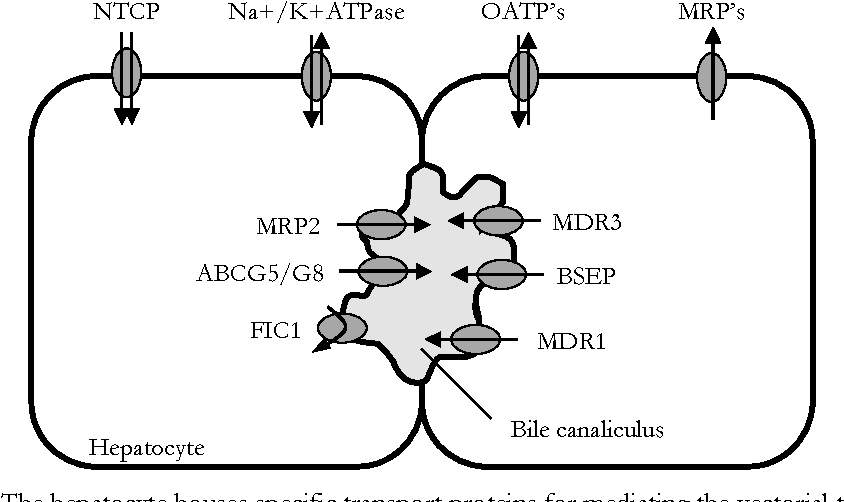 Chapter 1 Function And Regulation Of Hepatic Transporters Involved