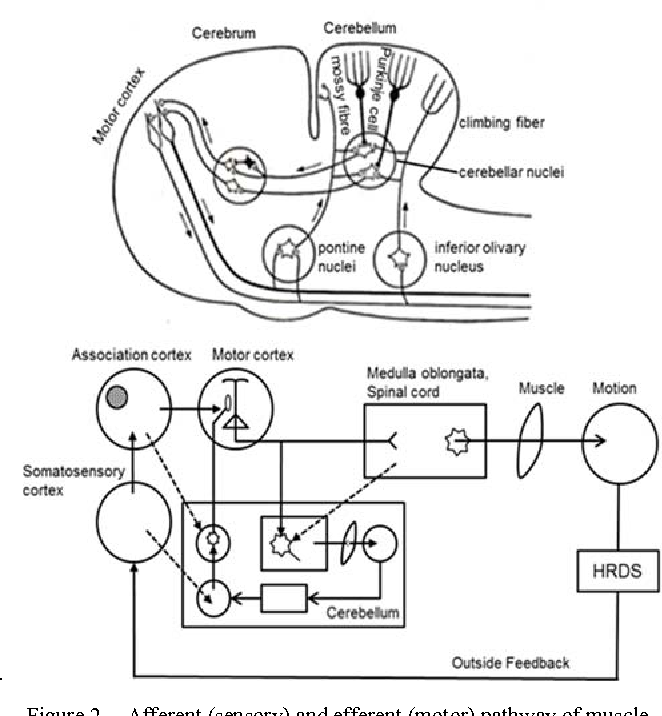 Figure 2 From Hand Rehabilitation Device System Hrds For