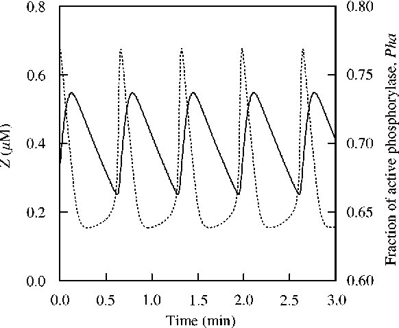 """FIG. 5. Cytosolic Ca2` concentration, Z ())))))))) and phosphorylase a levels, Pha (**) time courses at a given level of stimulation corresponding to b""""0.3. The curves are obtained by numerical integration of eqns (4), (5) and (1). The values of the parameters are Glc""""10 mM, K1 1 """"0.1, K 2 """"0.2, K a1 """"K a2 """"10 mM, K a5 """"K a6 """"0.5 kM, a""""c""""9,< M1 """"1.5 min~1,< M2 """"0.6 min~1, k""""10 min~1, k f """"0.7 min~1, n""""m""""2, p""""4, v 0 """"1 kMmin~1, v 1 """"5.7 kMmin~1, < M2i """"30 kMmin~1, < M3i """" 325 kMmin~1, K 2i """"0.5 kM, K Ri """"1.7 kM, K Ai """"0.46 kM."""