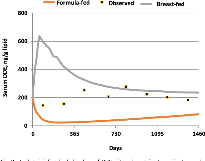 Use of a simple pharmacokinetic model to study the impact of breast