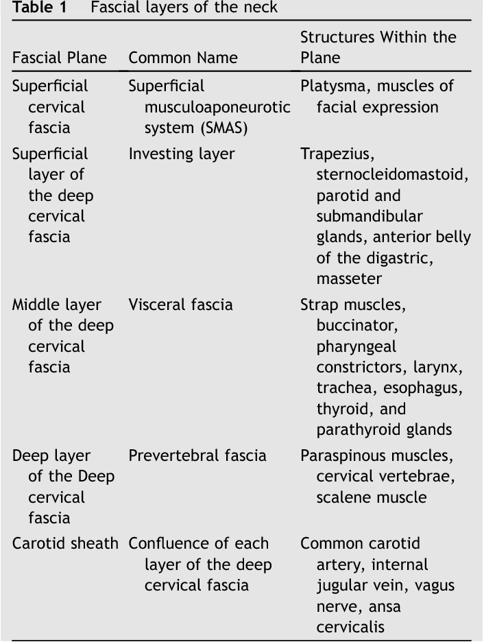 Table 1 from Neck infections. - Semantic Scholar