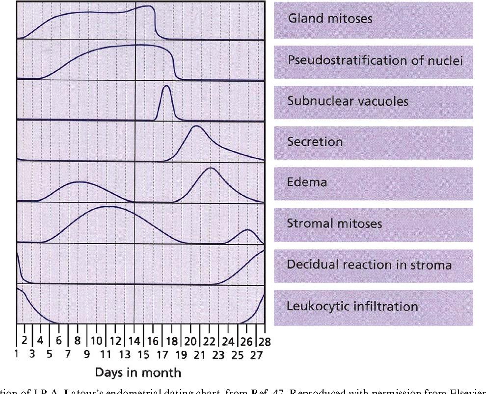 Endometrial dating chart