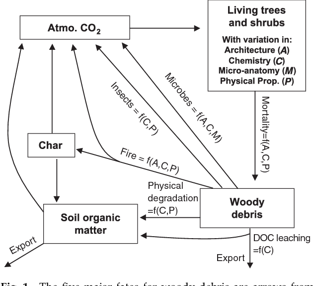 Plant Traits And Wood Fates Across The Globe Rotted Burned Or
