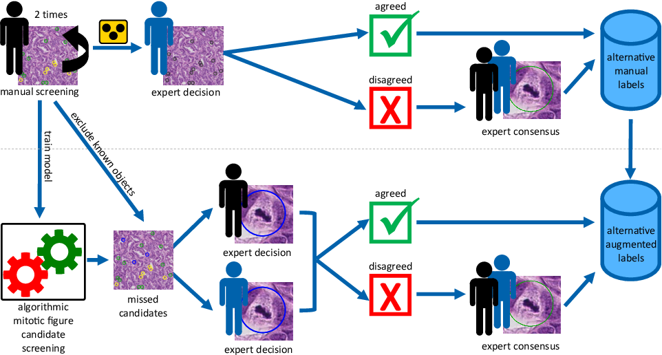 Figure 3 for Are pathologist-defined labels reproducible? Comparison of the TUPAC16 mitotic figure dataset with an alternative set of labels