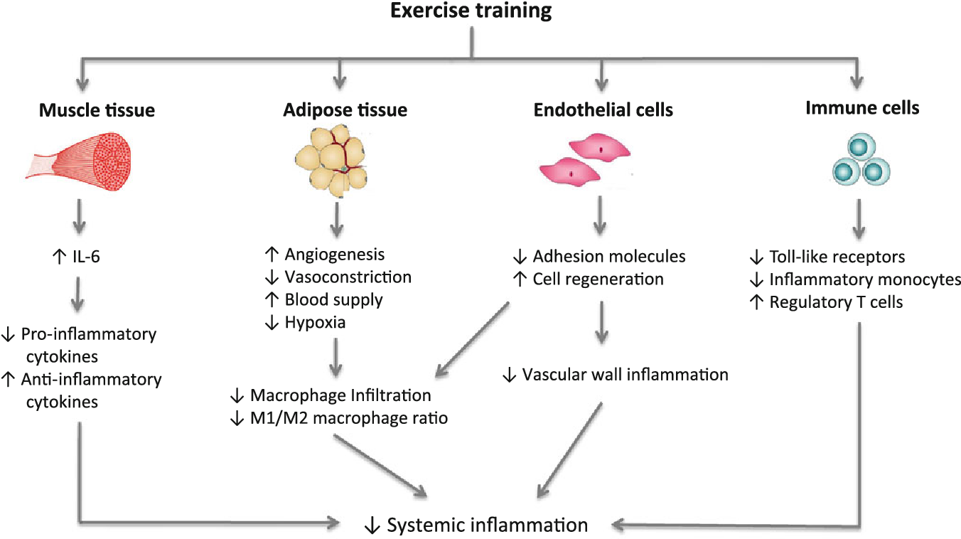 Figure 1 from Effects of Exercise Training on Chronic Inflammation