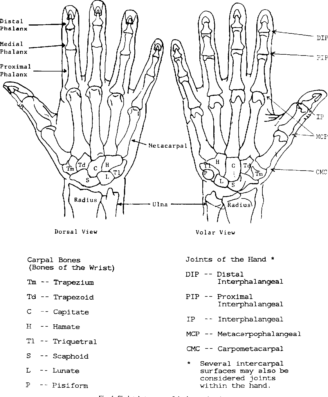 A graphic model of the human hand using CATIA - Semantic Scholar