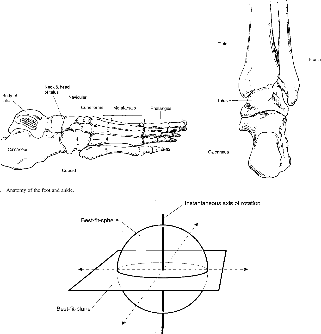 Figure 1 from The instantaneous axis of rotation (IAOR) of the foot ...