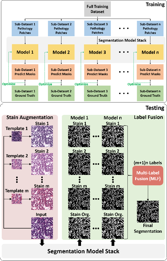 Figure 3 for BEDS: Bagging ensemble deep segmentation for nucleus segmentation with testing stage stain augmentation