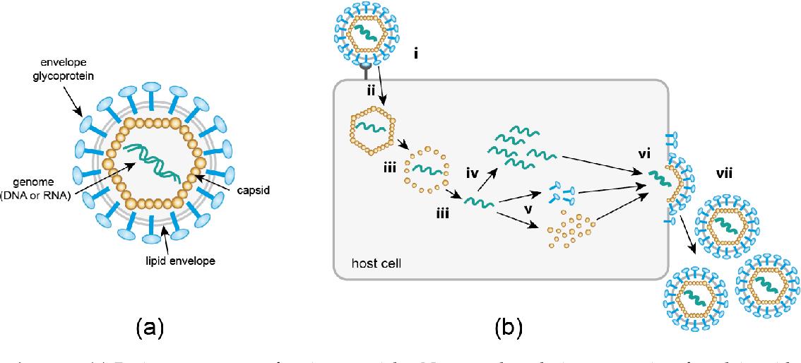 PDF] A Spotlight on Viruses—Application of Click Chemistry