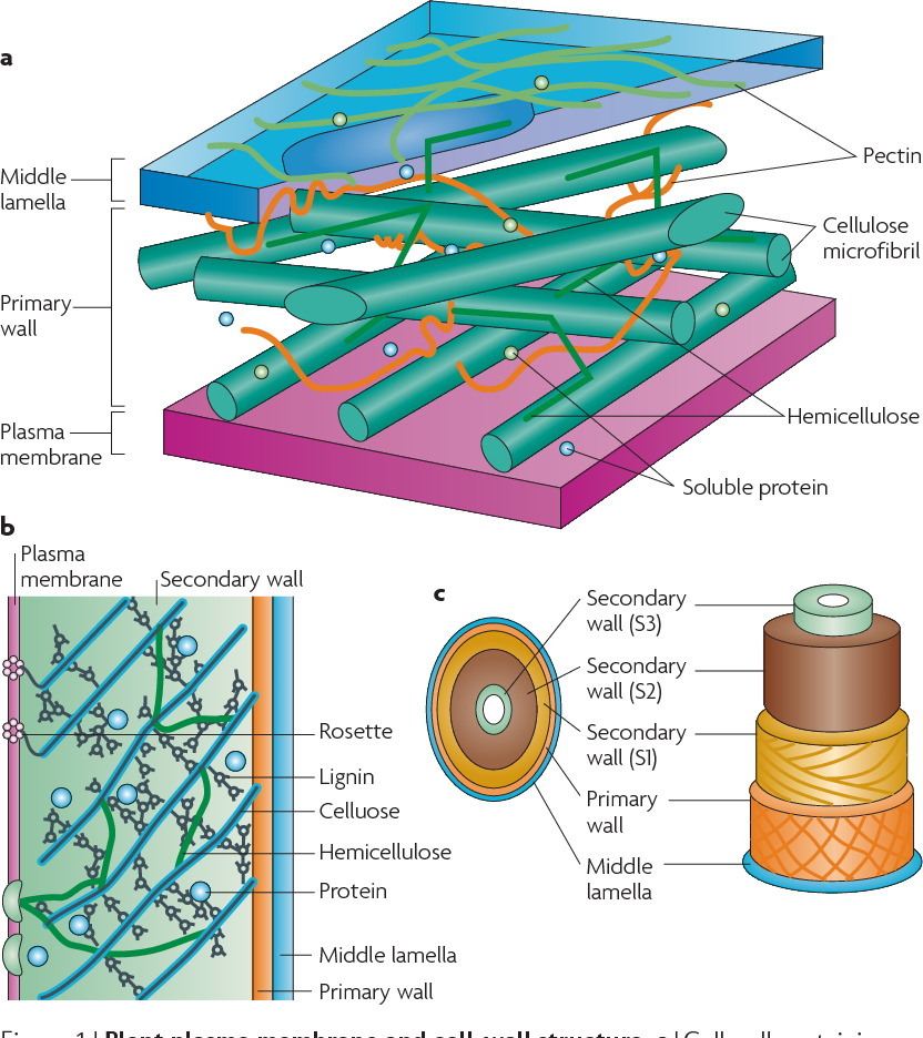 celluosic biofuel
